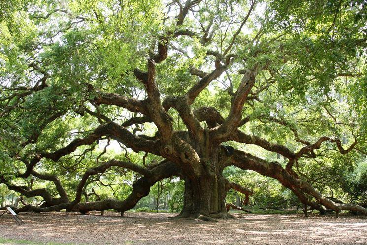 la-quercia-albero_NG1